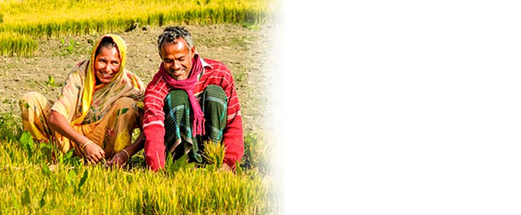 Adding Value to Agriculture Extension