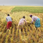 Seminar: Food Systems and Nutrition in Bangladesh