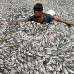 Bangladesh experiences fish farming revolution